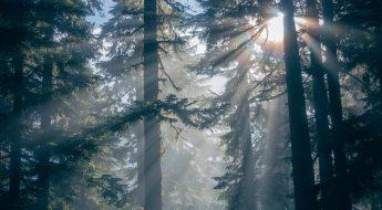 5 grunner til å være ute i naturen