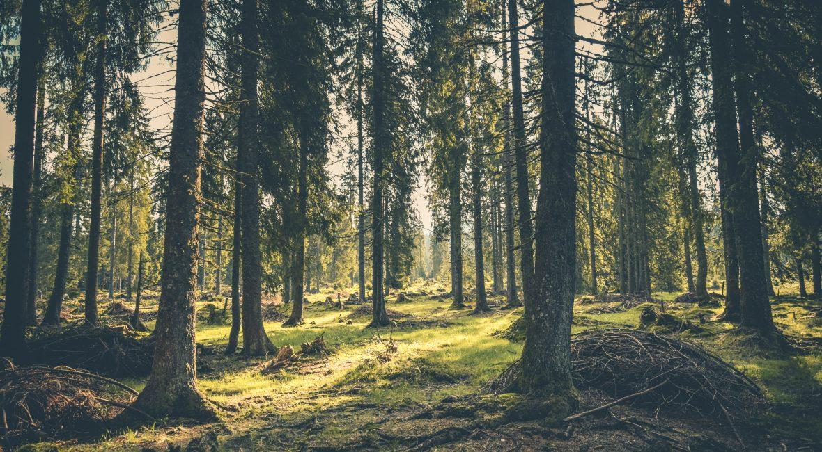 Hvorfor nettcasino er bedre for miljøet