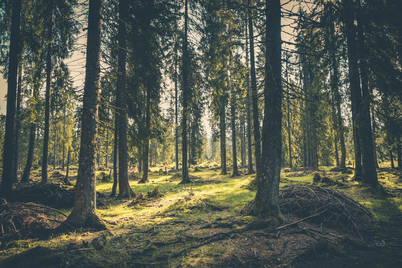 Skog og skogvern